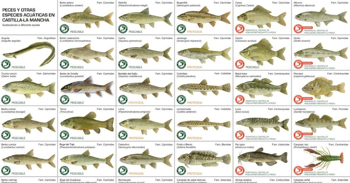 Normativa De Pesca De Castilla La Mancha Actualizada