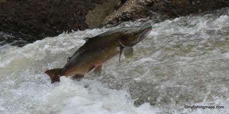 pesca salmon cantabria