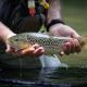 pesca de la trucha en Asturias