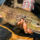 Pesca de la trucha en CyL
